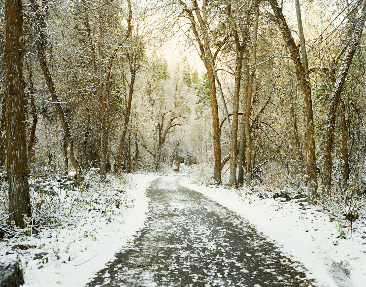 A Snowy Path | Outside of Salt Lake City