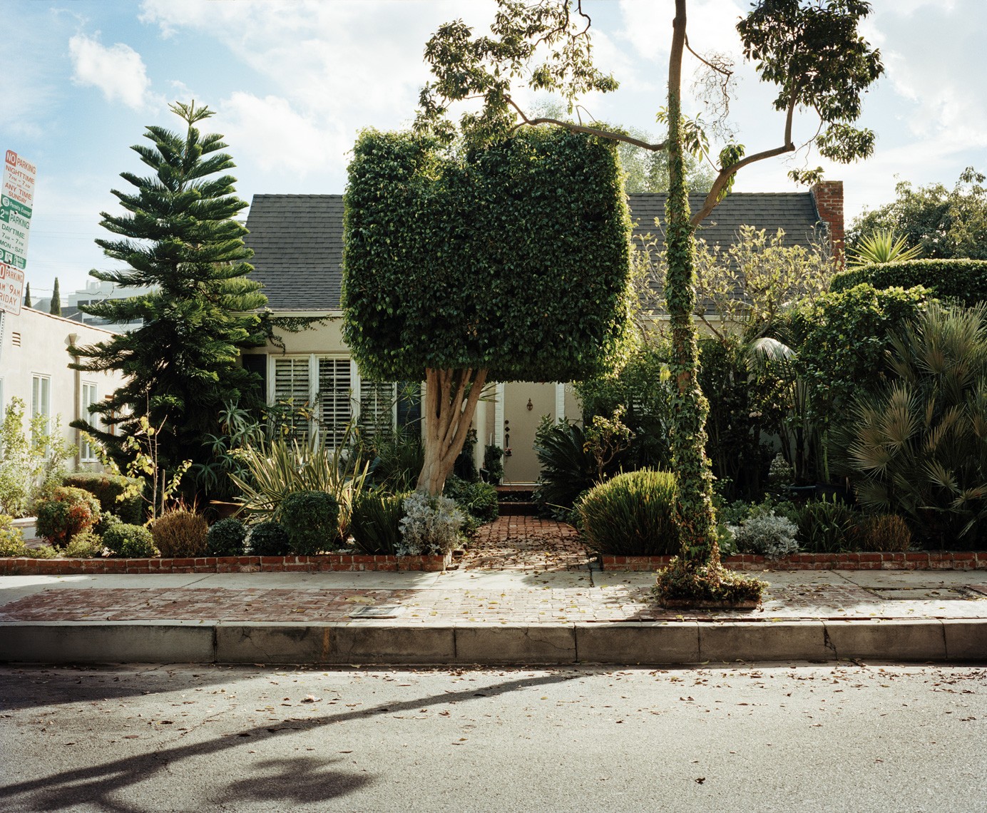 Shrubbery | Los Angeles
